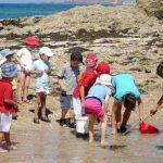 Le 20 juillet 2006 - Une colonie de vacances à Saint-Lunaire en Bretagne. Observation de la faune et la flore à marée basse. — DURAND FLORENCE/SIPA